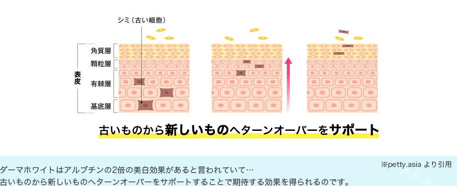 古い細胞を新しい細胞へ再生させる